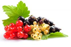 Currants & Gooseberries